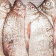 Carp bream — Stock Photo #64837555