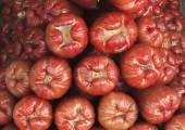 Java apples — Stock Photo
