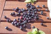 Blueberry vaccinium corymbosum — Stock Photo