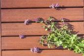 Oregano origanum vulgare flower — Stock Photo