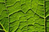 Green leaf fibers close-up background — Stock Photo