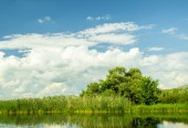 Summer pond in the background of sky and trees — Stock Photo