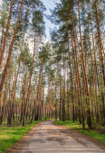 Road in the coniferous forest — ストック写真