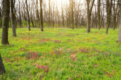 Flowery meadow in the woods — Stok fotoğraf