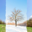 Lonely same tree in two seasons — Stockfoto #70793367