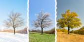 Lonely tree in three seasons 3 in 1 — Stock Photo