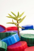 Plant between plastic stoppers — Stock Photo