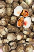 Fresh Blood cockle shell at the market — Stock Photo