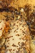 Honeycomb on a banana leaf in market — Stock fotografie