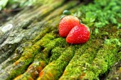 Strawberry on wooden background in a garden. — Stock Photo