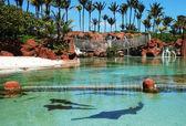 Resort Predators — Stock Photo