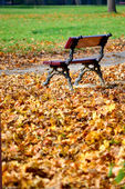 Bench in the park in autumn — Stock Photo