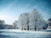 Three tree in a field in winter with falling snow — Stock Photo