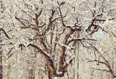 Winding tree branches covered with snow — Stock Photo