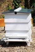 White bee hive — Stock Photo