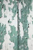 Wood plankor med gröna skal — Stockfoto