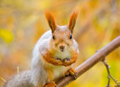 Squirrel on the branch — ストック写真