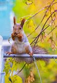 松鼠在树枝上 — 图库照片