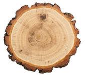 Snijden van boom — Stockfoto