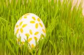 Colored easter egg in grass — Stock Photo