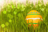 Colored easter egg in grass with boke — Stockfoto