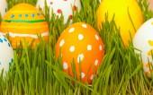 Oeufs de Pâques en herbe — Photo