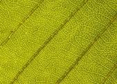 Green leaf — Stock Photo