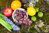 Still life of fruit on moss ground with rabbit and bird, Hyacint — Stock fotografie