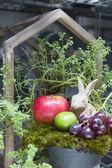 Still life of fruit and Rabbit — Stock Photo