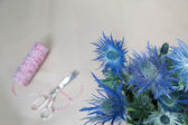 Still life of Eryngium planum Blue Sea Holly flowers — Stock Photo