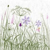 Painted meadow — Foto de Stock