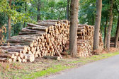 Tree logs piled up near a forest road — Stock Photo