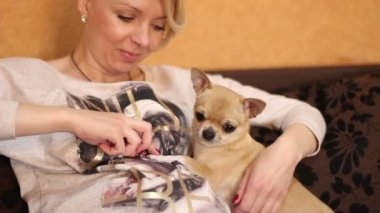 Chihuahua dog and pregnant woman — Stock Video