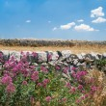 ������, ������: Dry stone wall