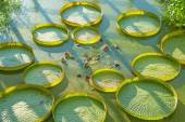 Aquatic plants — Stock Photo