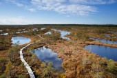 View to walking trail in swamp — Stock Photo