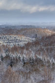 Areal view to wintry forest — Stock Photo