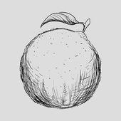 Fruit drawn design  — Stock Vector