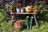 Autumn harvest. Vegetables on the bench — Stock Photo