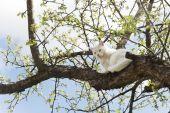 Gato blanco grande sentado en un árbol — Foto de Stock