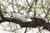 White cat climbs a tree — Stock Photo