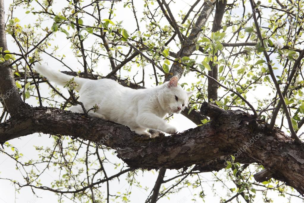 Дерево белый кот