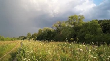 Meadow with rainbow after the rain. — Stock Video