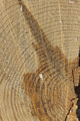 Background of wood round texture — Stock Photo