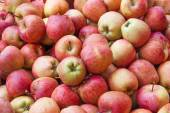 Red apple standing out from large group of green apples. — Stock Photo