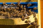 Ruche. Coup de macro d'abeilles essaimage sur un nid d'abeilles — Photo