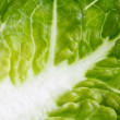 Little gem lettuce. — Stock Photo #63872521