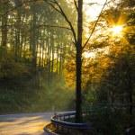Autumn sunset through the trees — Stock Photo #59302893