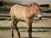 Horse. — Foto de Stock