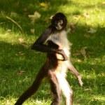Monkey — Stock Photo #54367083